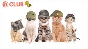 International Cat Day Challenge!